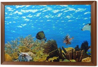 Obraz w Ramie Podwodne panoramy z tropikalnej rafy na Karaibach