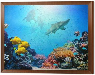 Podwodne sceny. rafa koralowa, grupy ryb, rekiny