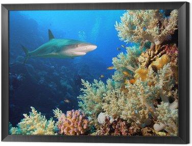 Obraz w Ramie Podwodne zdjęcia rafy koralowej z rekina i nurków