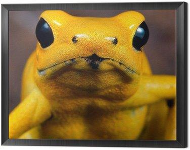 Obraz w Ramie Poison dart frog