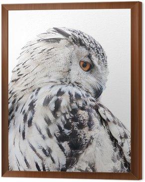 Obraz w Ramie Pojedyncze czarne i białe sowy