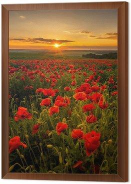 Obraz w Ramie Pole makowe o zachodzie słońca