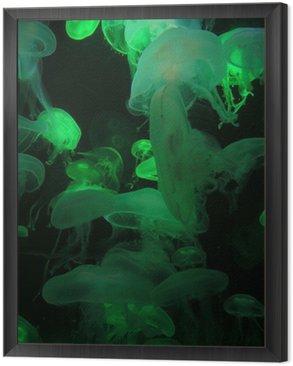 Obraz w Ramie Przezroczyste meduzy - zielony