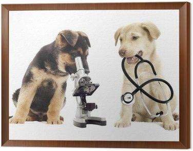 Obraz w Ramie Puppy i mikroskop
