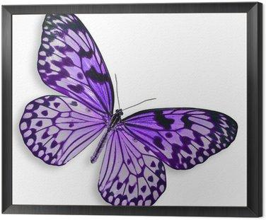 Obraz w Ramie Purpurowy motyl latający