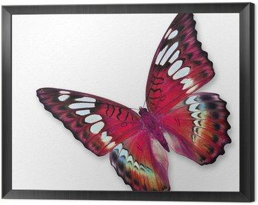 Obraz w Ramie Red butterfly