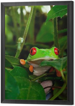 Red Eyed Tree Frog w liściach