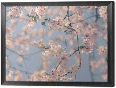 Obraz w Ramie Retro Filtr Cherry Blossom