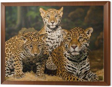 Obraz w Ramie Rodzina Jaguar