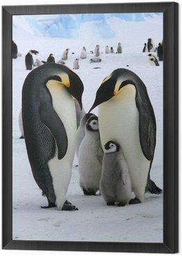 Rodzina pingwinów cesarskich (Antarktyda)
