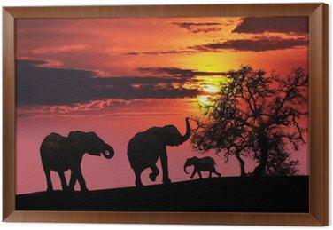 Obraz w Ramie Rodzina słoń o zachodzie słońca