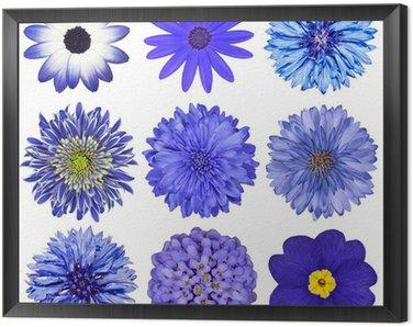 Obraz w Ramie Różne Niebieski Wybór kwiatów izolowanych na białym