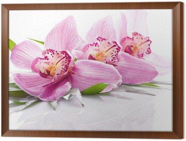 Obraz w Ramie Różowy kwiat orchidei