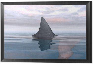 Obraz w Ramie Shark bliska