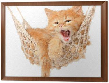 Obraz w Ramie Słodkie rudowłosa kotka w hamaku