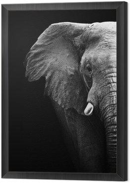 Obraz w Ramie Słoń z bliska