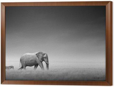 Obraz w Ramie Słoń z zebry (przetwarzanie artystyczne)