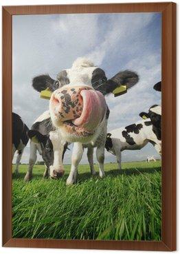 Obraz w Ramie Śmieszne krowa