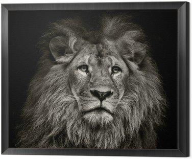 Obraz w Ramie Smutne lew