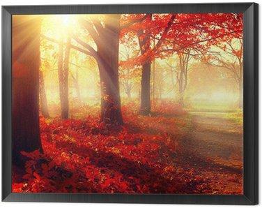 Obraz w Ramie Spadek scena. Piękny jesienny park w słońcu