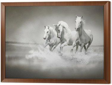 Obraz w Ramie Stado białych koni biegnących przez wody