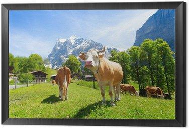 Obraz w Ramie Stado krów