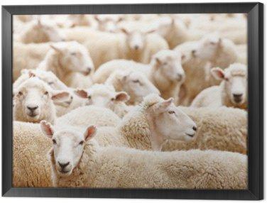 Obraz w Ramie Stado owiec