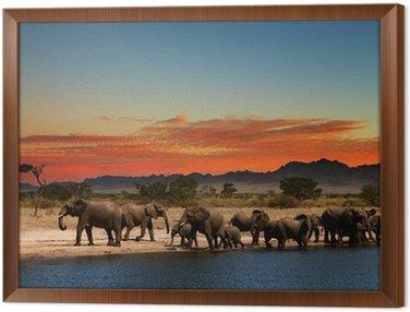 Obraz w Ramie Stado słoni w afrykańskiej sawanny