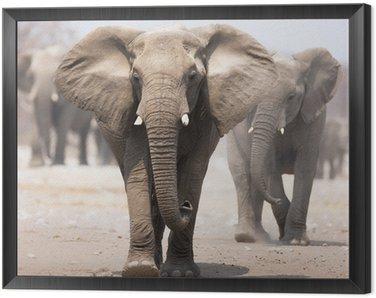 Obraz w Ramie Stado słoni