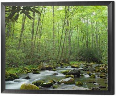 Obraz w Ramie Strumień jungle