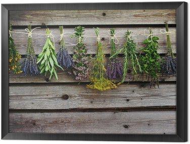 Obraz w Ramie Suszenie ziół na drewnianej stodole w ogrodzie