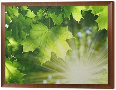 Obraz w Ramie Świeże ziele w lesie