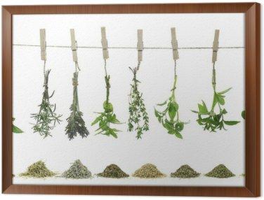 Obraz w Ramie Świeże zioła wiszące na liny