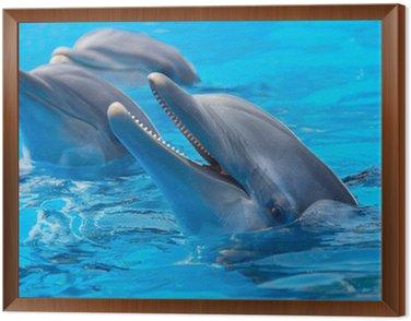 Obraz w Ramie Szczęśliwe delfiny