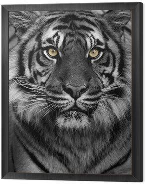 Obraz w Ramie Tiger Eyes