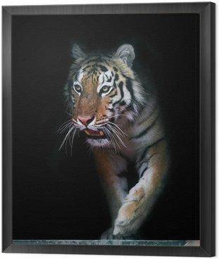 Obraz w Ramie Tiger wychodzi