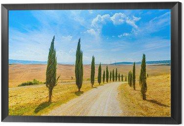 Obraz w Ramie Toskania, Cyprysy white road krajobrazu wiejskiego, Włochy, Europa