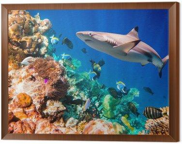Obraz w Ramie Tropikalna rafa koralowa.