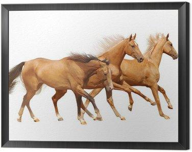 Obraz w Ramie Trzy konie na białym