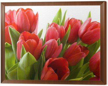 Obraz w Ramie Tulipany z Holandii