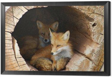 Obraz w Ramie Twin Fox ukryte w wydrążonej dzienniku