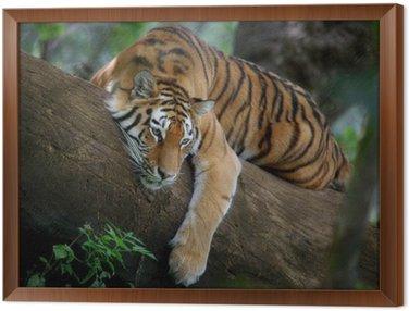 Obraz w Ramie Tygrys na drzewie