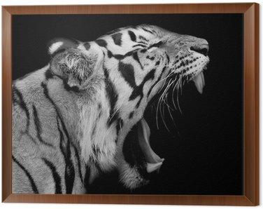 Obraz w Ramie Tygrys sumatrzański ryk