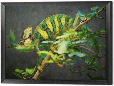 Obraz w Ramie Ukrytych kameleona