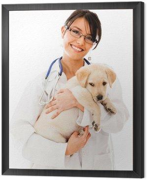 Obraz w Ramie Vet trzyma małego szczeniaczka
