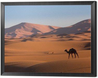 Obraz w Ramie Wielbłąd na pustyni Sahara, Maroko