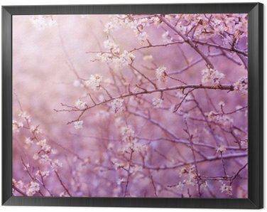 Obraz w Ramie Wiśniowe drzewo kwiat