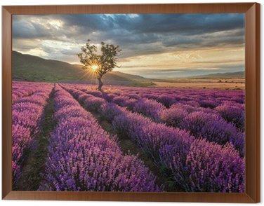 Obraz w Ramie Wspaniały krajobraz z lawendowego pola na wschód słońca