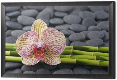 Obraz w Ramie Wspaniały orchidea i cienkie bambusowy gaj na kamyczki