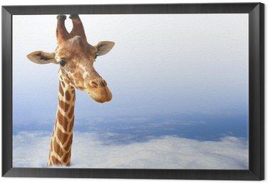 Obraz w Ramie Zabawna żyrafa z wychodzi z chmury